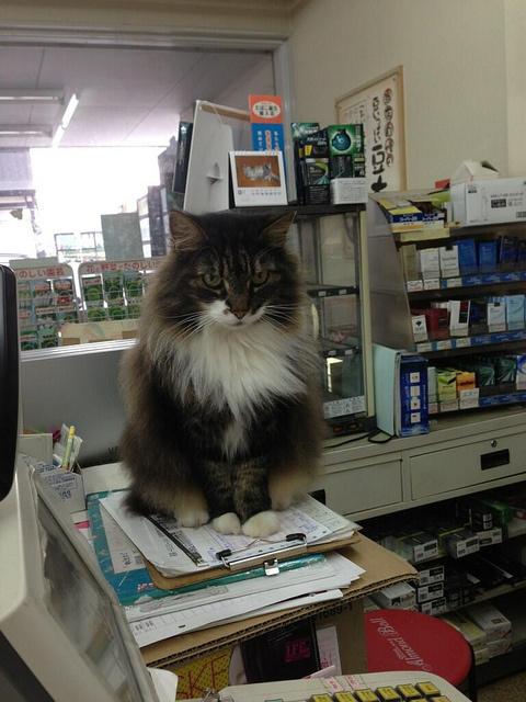 歡迎光臨貓貓便利商店8