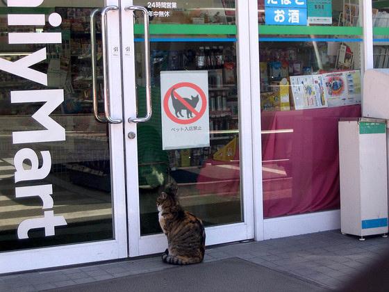 歡迎光臨貓貓便利商店9