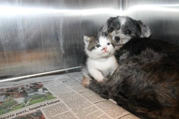 狗狗找到棄養小貓,堅決守護著牠2