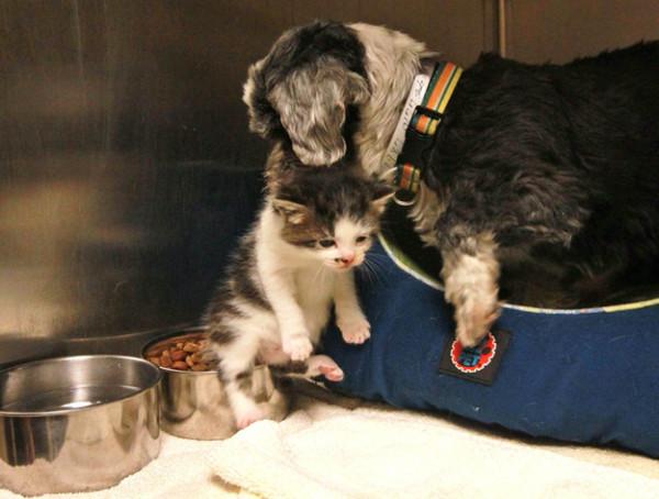 狗狗找到棄養小貓,堅決守護著牠4