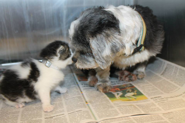 狗狗找到棄養小貓,堅決守護著牠5