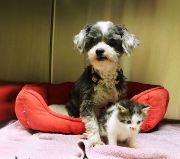 狗狗找到棄養小貓,堅決守護著牠7