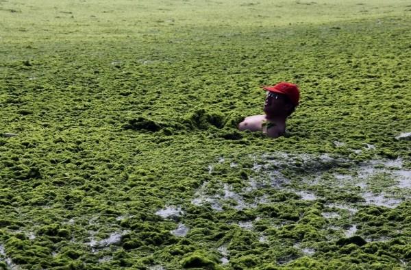 綠藻入侵中國的海邊4