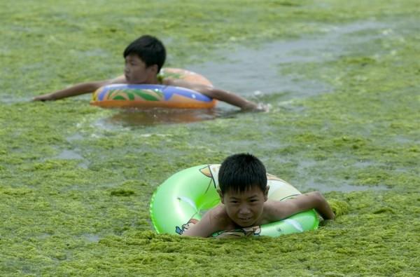 綠藻入侵中國的海邊8