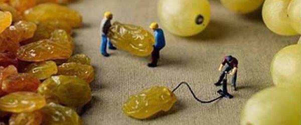 葡萄乾當然是這樣來的