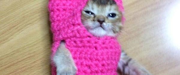 超可愛!但是會讓你落淚的蘑菇裝貓咪