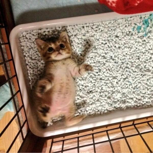 超可愛!但是會讓你落淚的蘑菇裝貓咪10