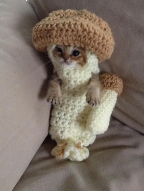 超可愛!但是會讓你落淚的蘑菇裝貓咪12