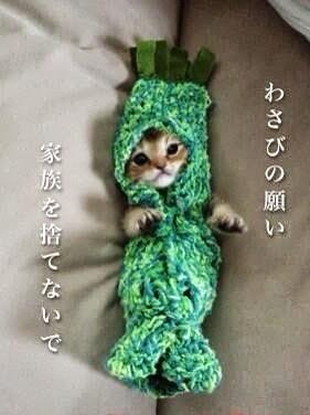 超可愛!但是會讓你落淚的蘑菇裝貓咪14