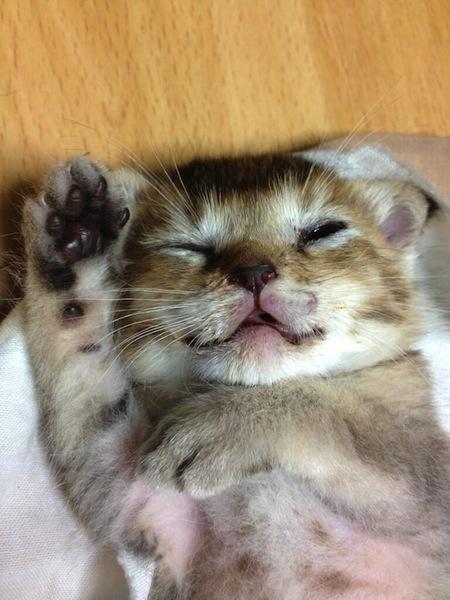 超可愛!但是會讓你落淚的蘑菇裝貓咪7