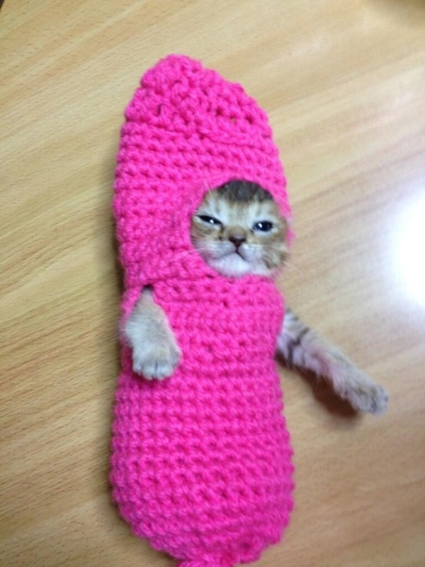 超可愛!但是會讓你落淚的蘑菇裝貓咪8