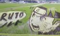 超神稻田畫!直接把動漫種到稻田裡