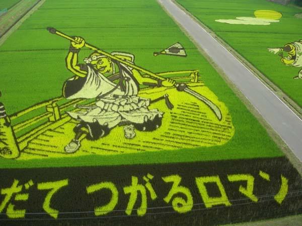 超神稻田畫!直接把動漫種到稻田裡8