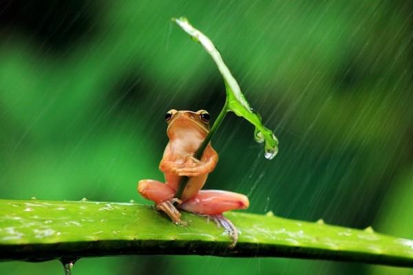 青蛙撐傘!1