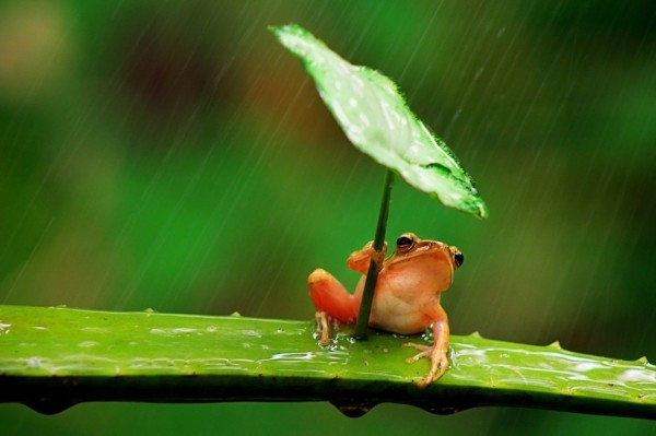 青蛙撐傘!2