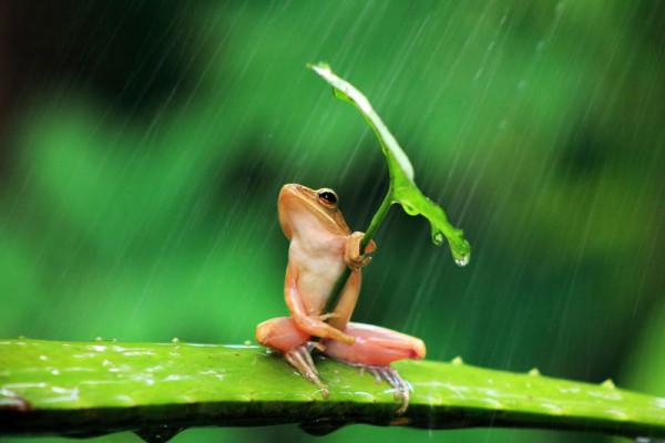 青蛙撐傘!3
