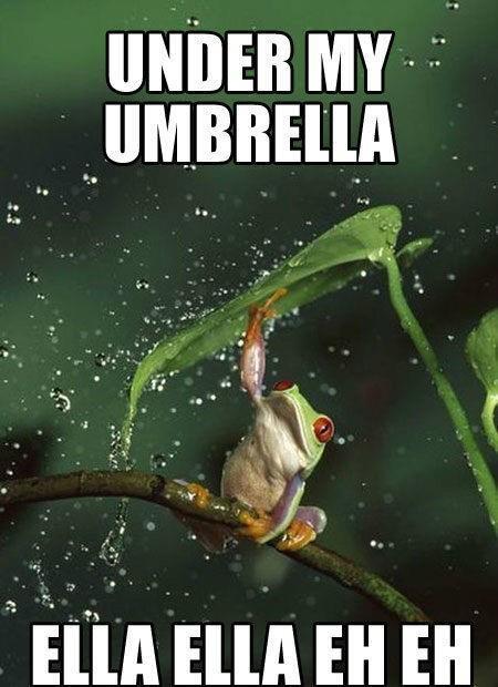 青蛙撐傘!5