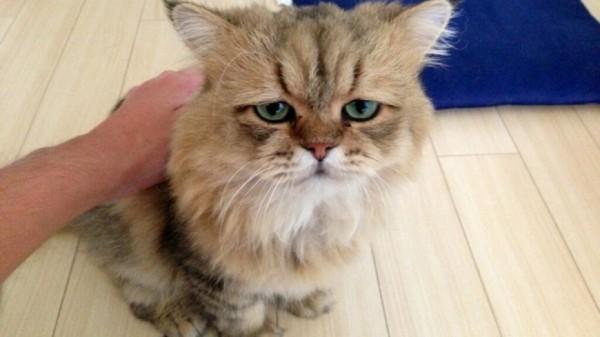 世界上最苦惱的貓咪-小夫1
