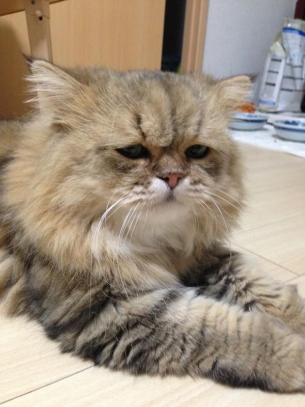 世界上最苦惱的貓咪-小夫10