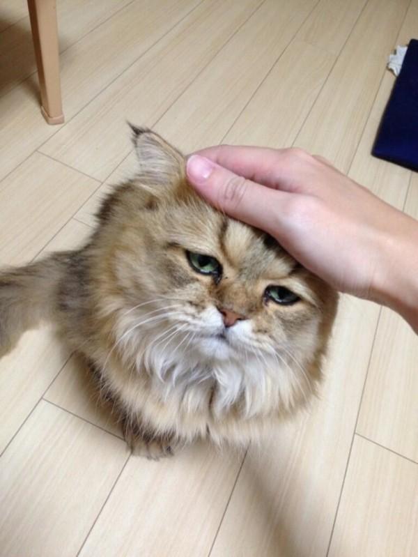 世界上最苦惱的貓咪-小夫11