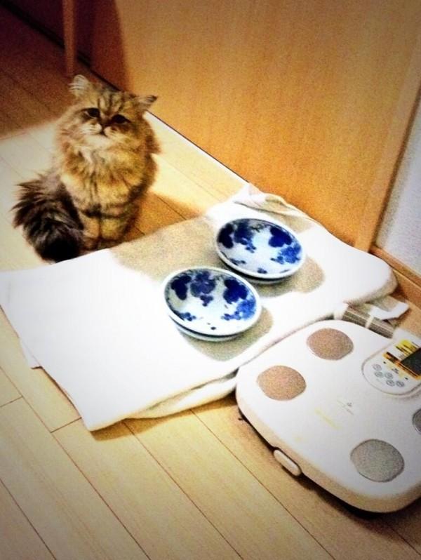 世界上最苦惱的貓咪-小夫12