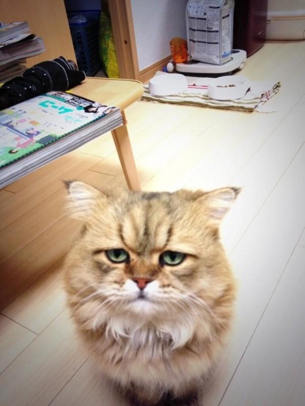 世界上最苦惱的貓咪-小夫2