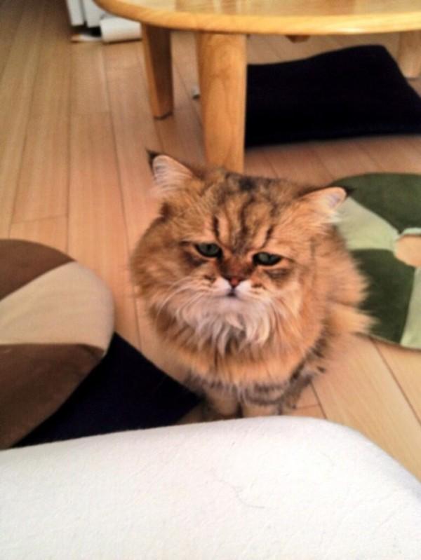 世界上最苦惱的貓咪-小夫3