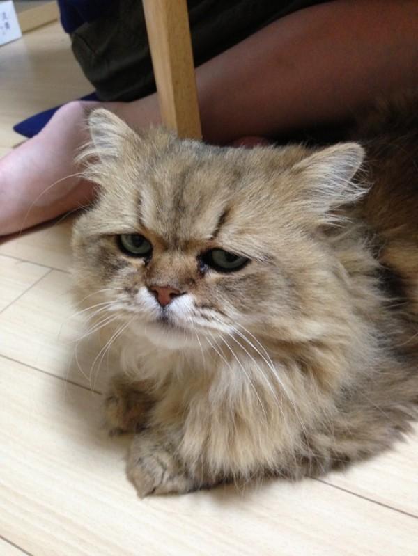 世界上最苦惱的貓咪-小夫5