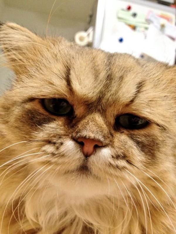 世界上最苦惱的貓咪-小夫7