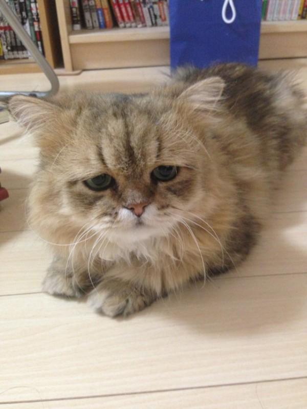 世界上最苦惱的貓咪-小夫8