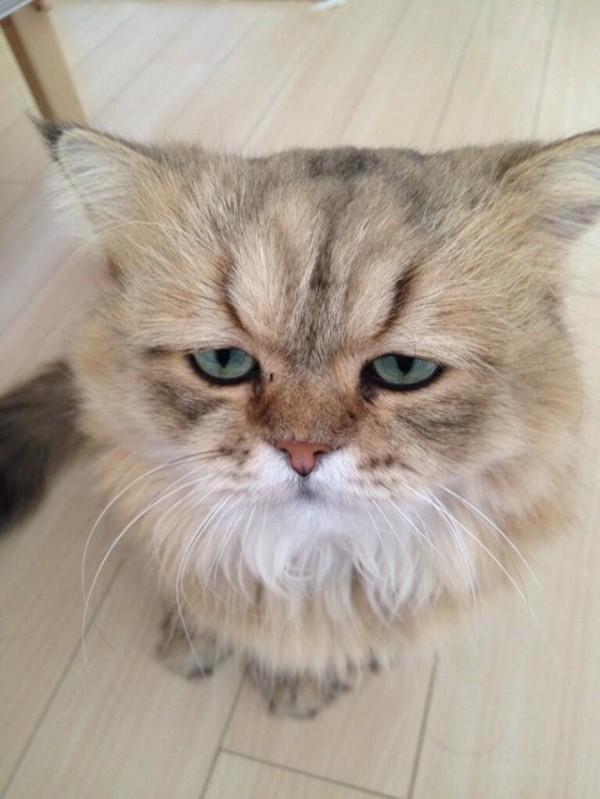 世界上最苦惱的貓咪-小夫9