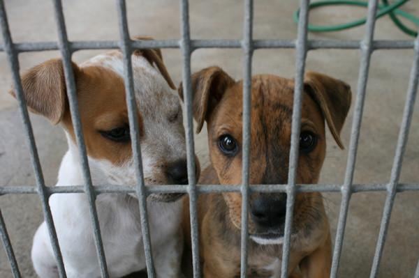 好大的官威,台中市宣布停止認養流浪狗2