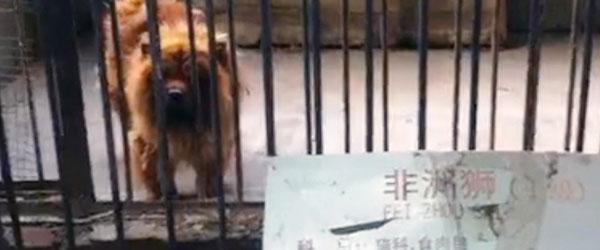 戲弄遊客的中國黑心動物園?