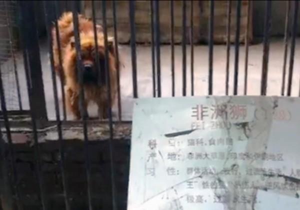 戲弄遊客的中國黑心動物園?1