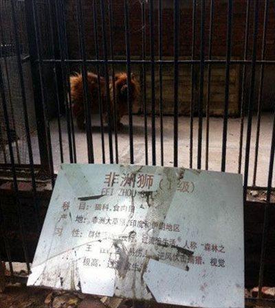 戲弄遊客的中國黑心動物園?2