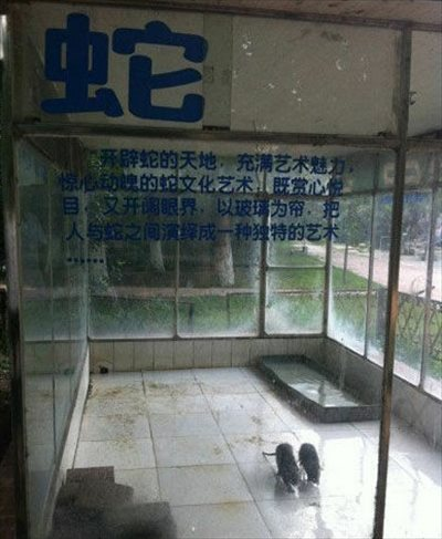 戲弄遊客的中國黑心動物園?4
