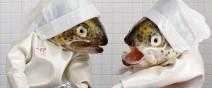 死魚也能活靈活現!怪趣魚頭上班的樣子