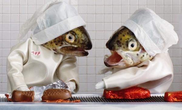 死魚也能活靈活現!怪趣魚頭上班的樣子2