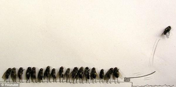 用蒼蠅屍體創作的藝術1