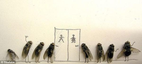 用蒼蠅屍體創作的藝術2