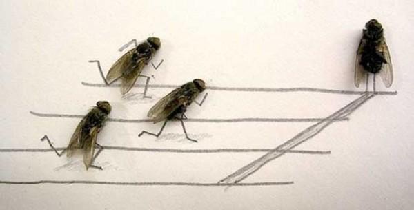 用蒼蠅屍體創作的藝術3