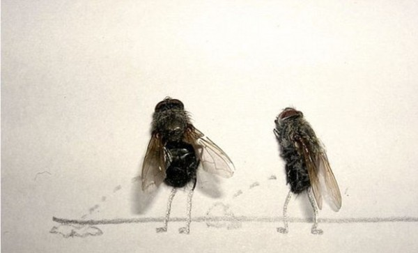 用蒼蠅屍體創作的藝術4