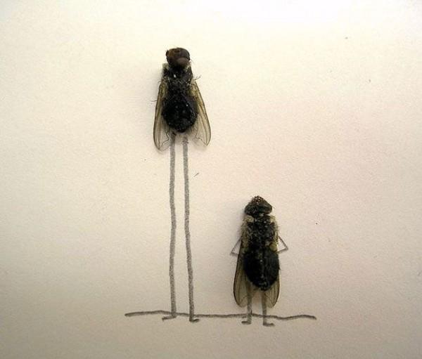 用蒼蠅屍體創作的藝術6