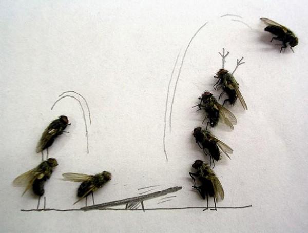 用蒼蠅屍體創作的藝術8