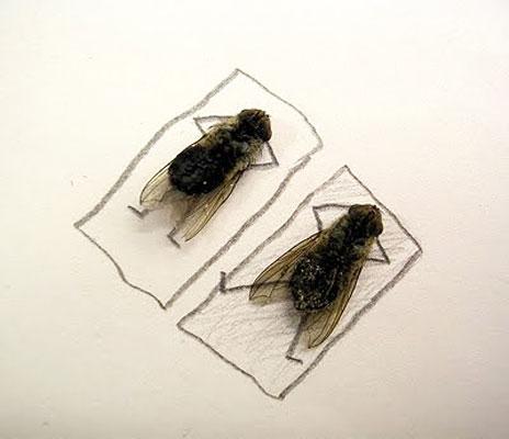 用蒼蠅屍體創作的藝術9