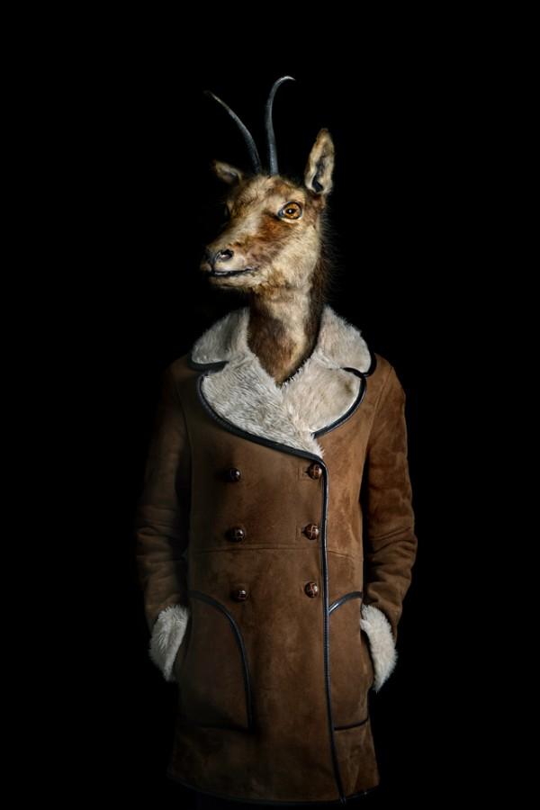 穿得比你還時尚的動物們10
