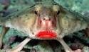 20種讓你覺得世界很奇怪的罕見動物