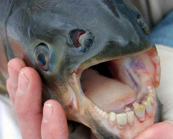 20種讓你覺得世界很奇怪的罕見動物10
