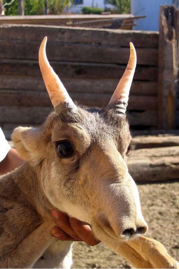 20種讓你覺得世界很奇怪的罕見動物12-1