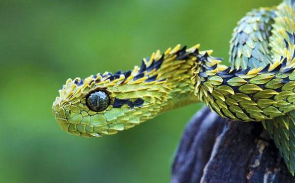 20種讓你覺得世界很奇怪的罕見動物13